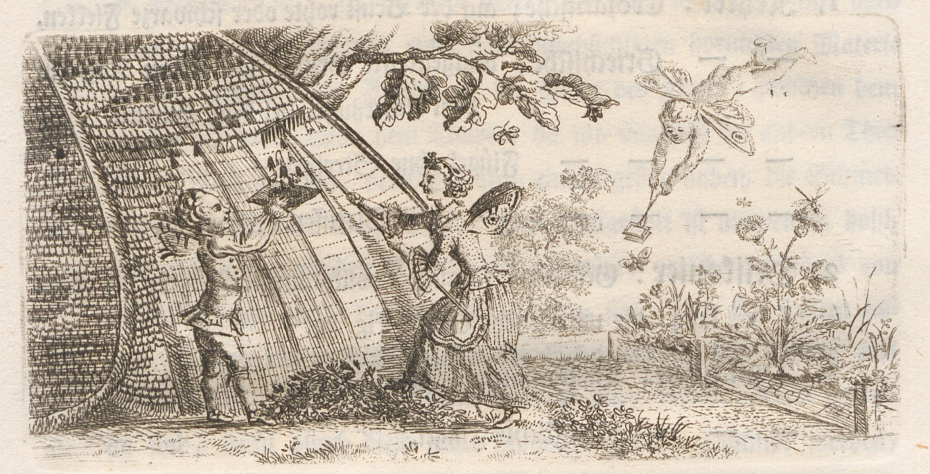 1761 engraving of entomology class